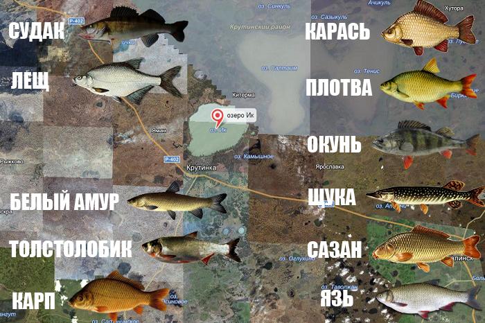 картинки рыб омской области