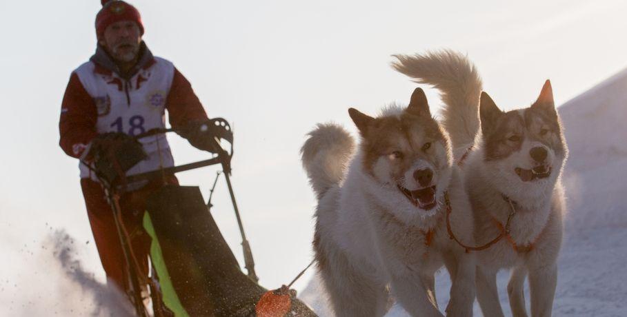 Под Омском состоятся гонки насобачьих упряжках каюров Сибири, Алтая иУрала