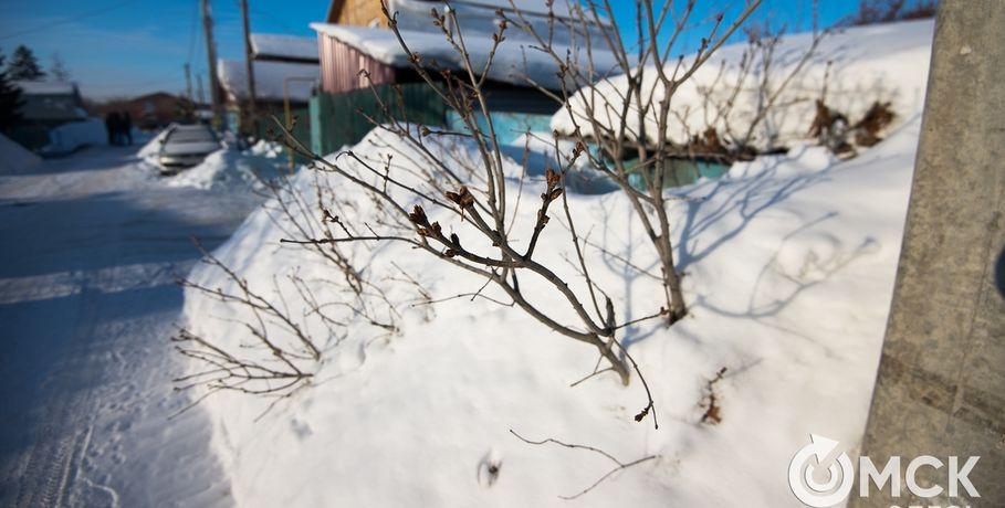 ВОмской области наследующей неделе потеплеет до-1°С