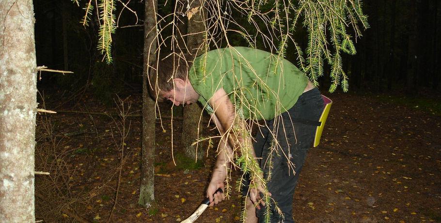 Насевере Омской области «черный» лесоруб нарубил елей насемь лет колонии