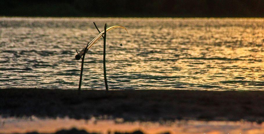 Вомском Минприроды пояснили, почему вобласти массово гибнет рыба