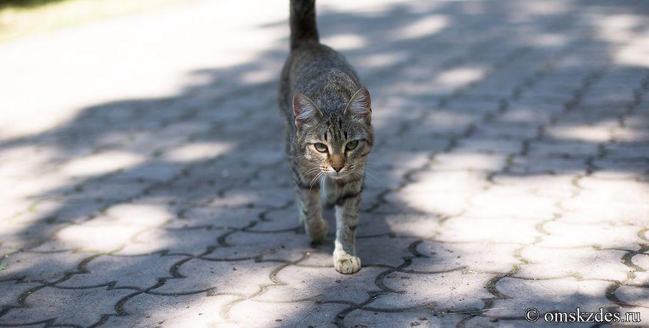 Труп 68-летнего пенсионера изОмска обглодали жившие сним 40 кошек