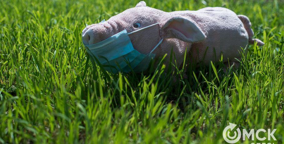 В Омской области снова умирают свиньи