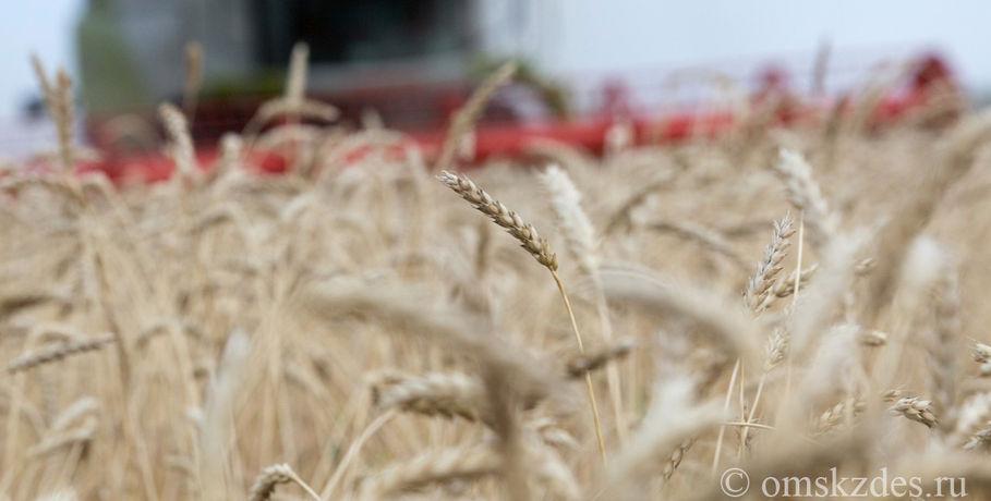 Минсельхозпрод Омской области просит аграриев попридержать зерно