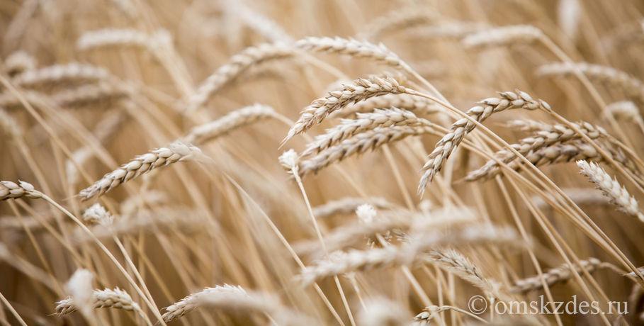 Экспорт омского зерна будут субсидировать