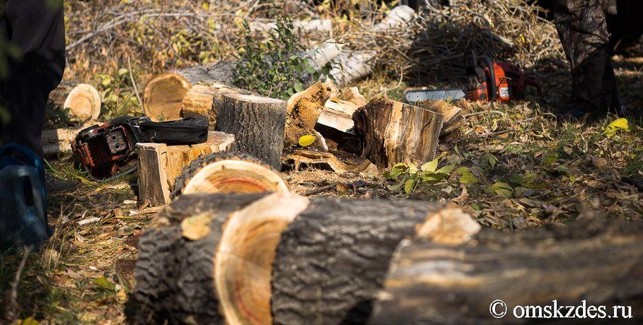 Глава основного управления лесного хозяйства Омской области получил представление отпрокуратуры