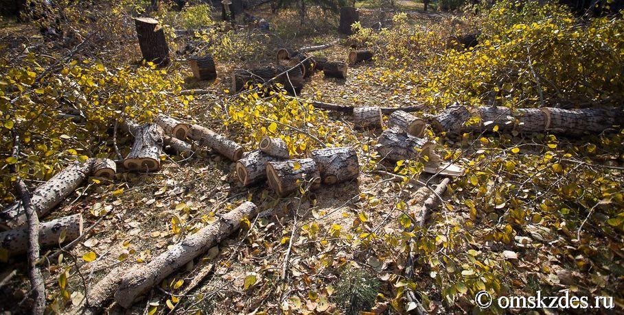 Инспектора обвиняют вхалатности завырубку леса вТарском районе