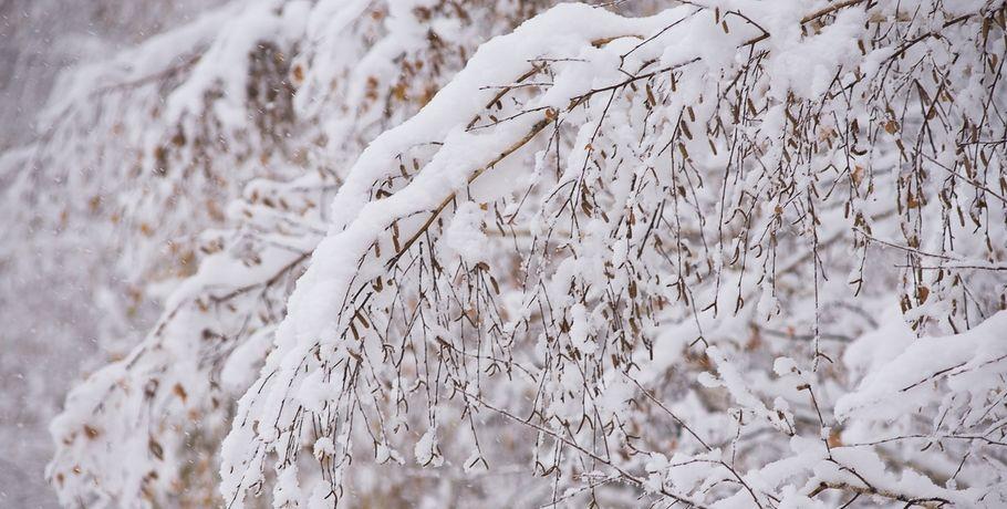 Наступающие выходные вОмской области будут снежными