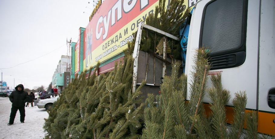 ВОмске реализуют елки, которые могут быть заражены вредными жуками