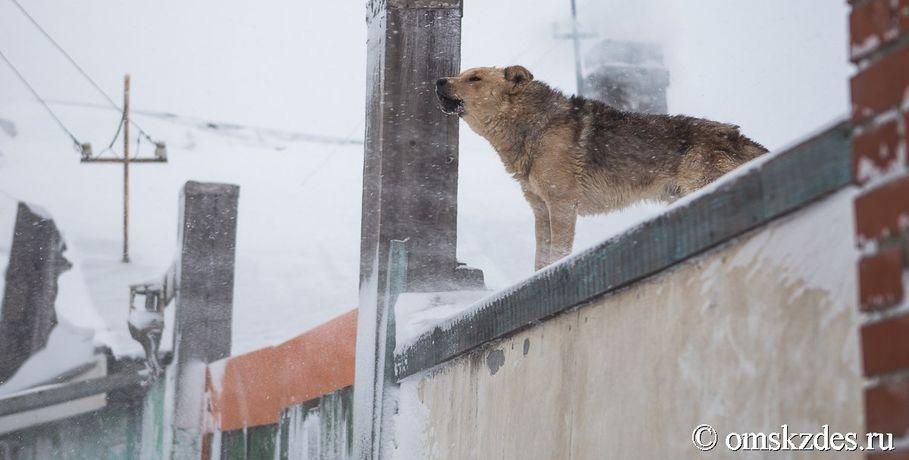 Омичка потребовала отпарка 300 000 руб. занападение собаки надочь