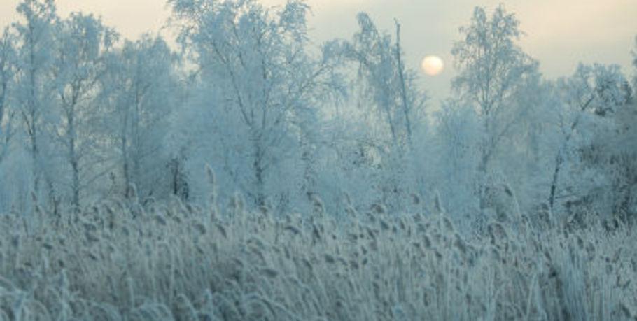 ВОмской области синоптики прогнозируют усиление морозов