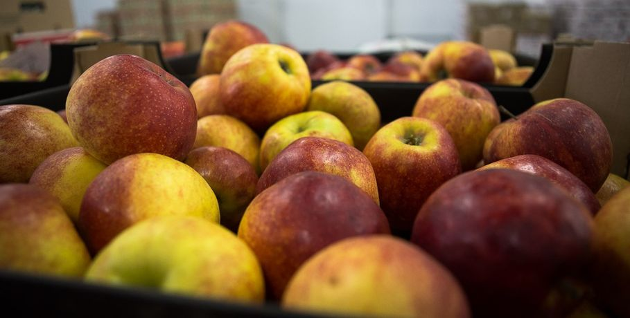 Руководство омского детского сада жалело для детей овощей и фруктов