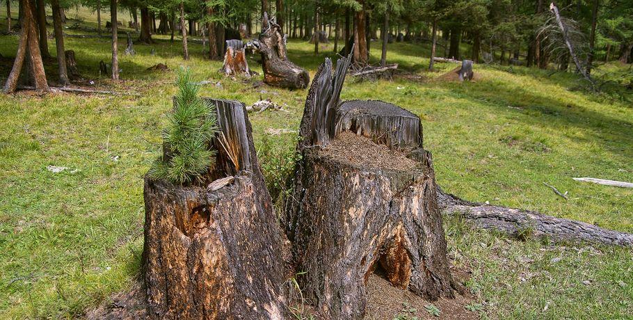Омские «черные лесорубы» кподжогу бани активистки ОНФ непричастны