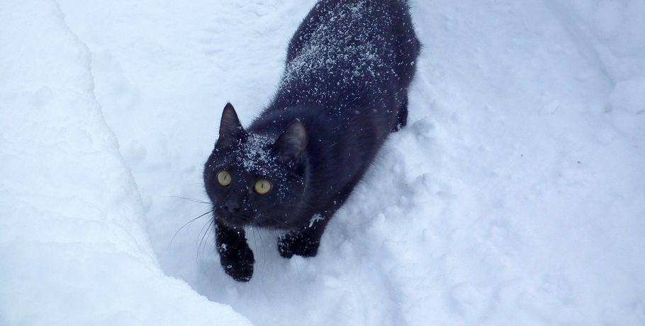 В Омске вторая половина апреля начнется со снегопадов