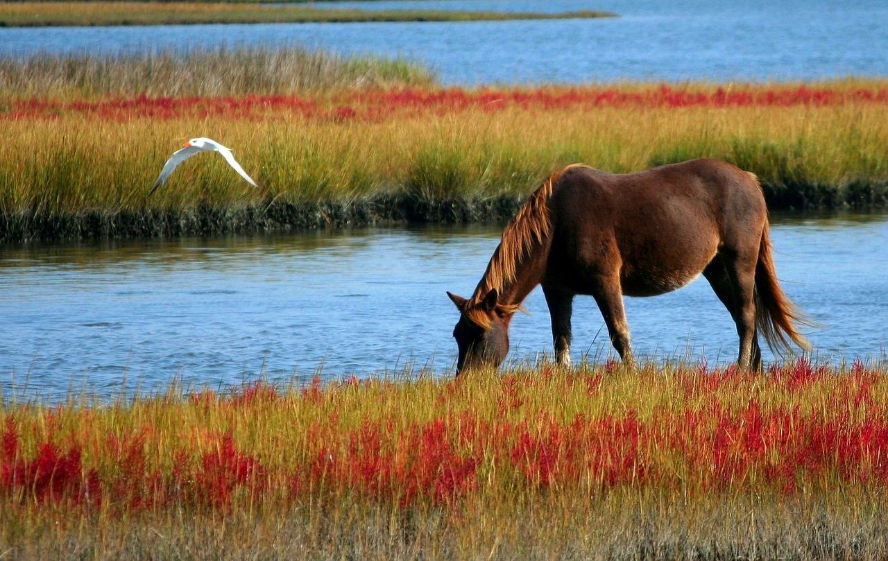 озеро конь в картинках решение, которое комбинирует