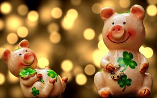 Новогодний тест: Какая вы свинья?