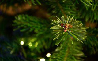 Что делать с ёлкой после Нового года? Семь полезных идей