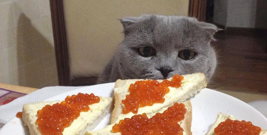 чем кормить котенка у которого коронавирус